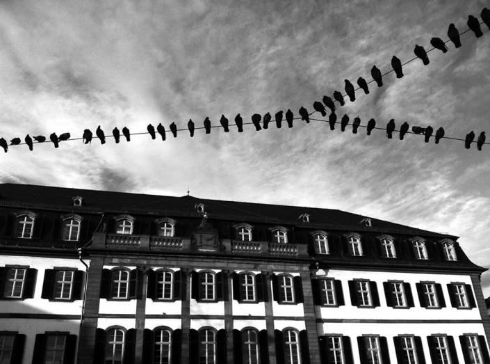 Darmstadt, Regierungspräsidium. Foto von Ulrike Liebig, Architektin. Mitarbeiterportrait von einszueins die Ingenieure für digitale Pläne.